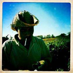 Trabajador mexicano fuma un cigarro en el campo tomatero de la montaña Chandler.