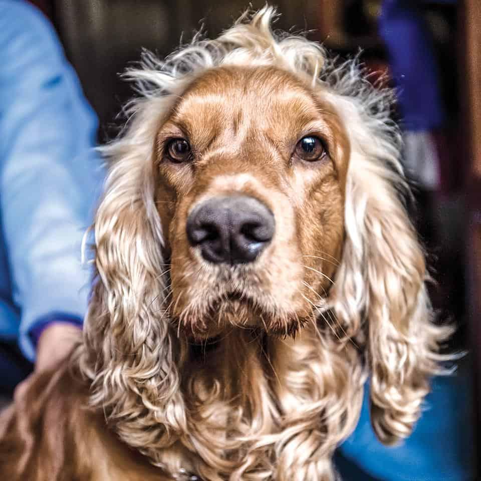 Maco, perro de Galeano