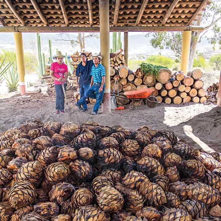 siete etapas de producción del mezcal en Oaxaca, int1