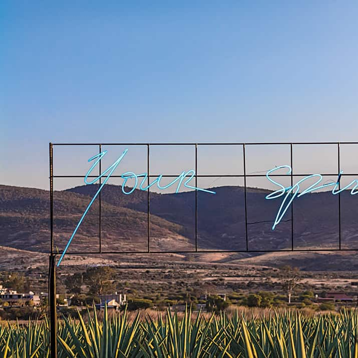 siete etapas de producción del mezcal en Oaxaca, int3