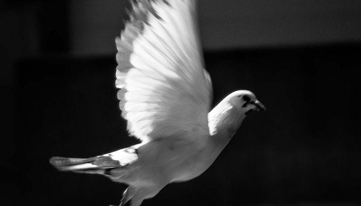 enemigos de la paz, int