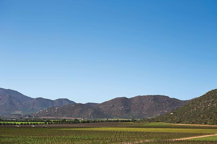 vino mexicano valle de guadalupe, monte xanic