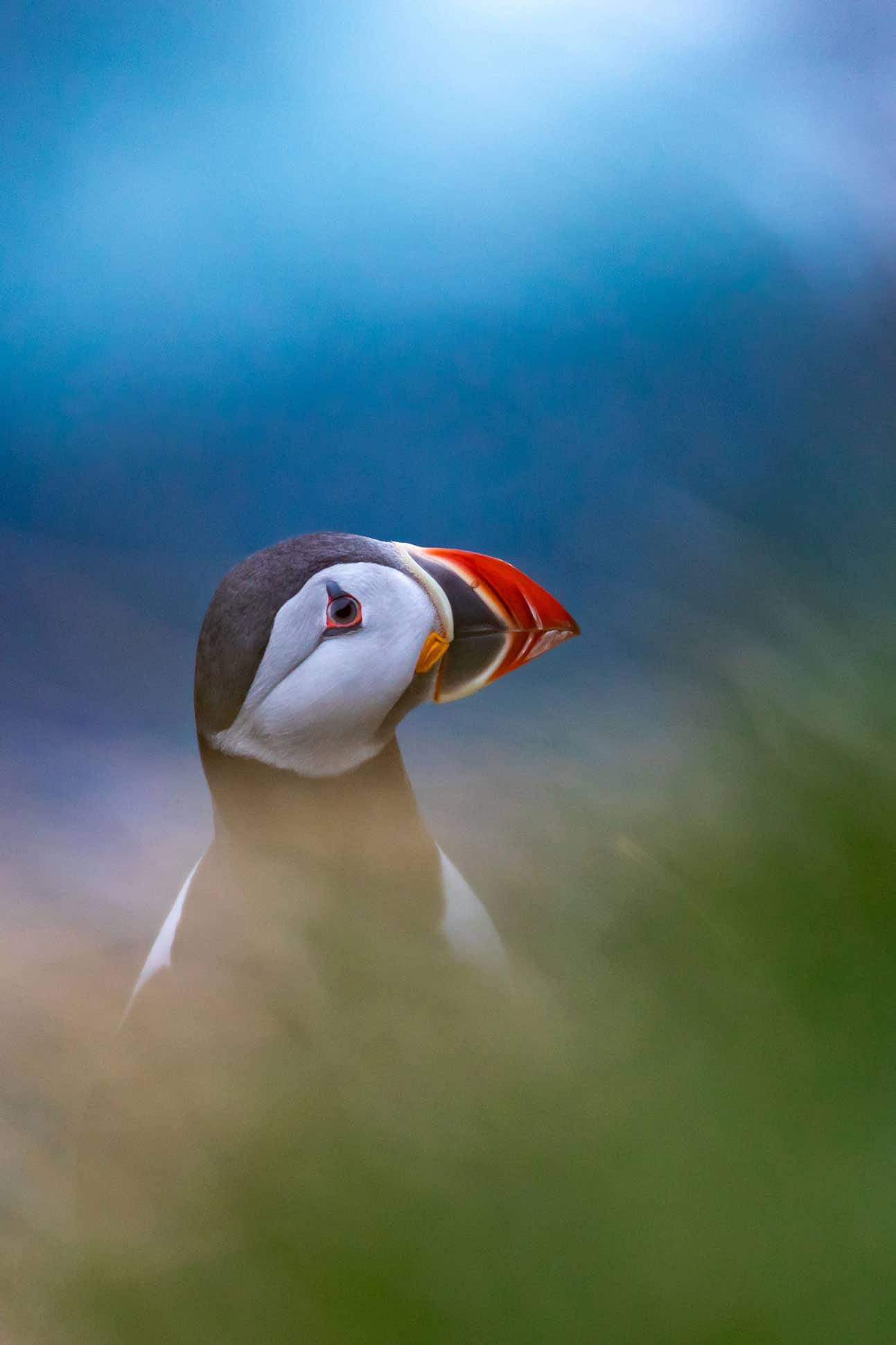 islas feroe aves