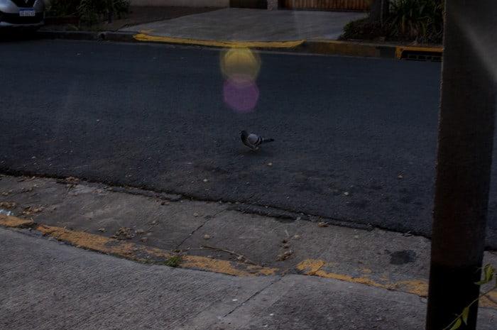 historias de un mundo distinto primer concurso de fotografía gatopardo Silvina Caserta 14