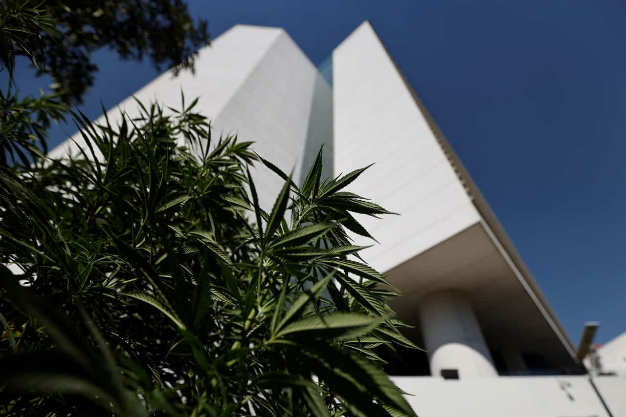 senado marihuana mexico