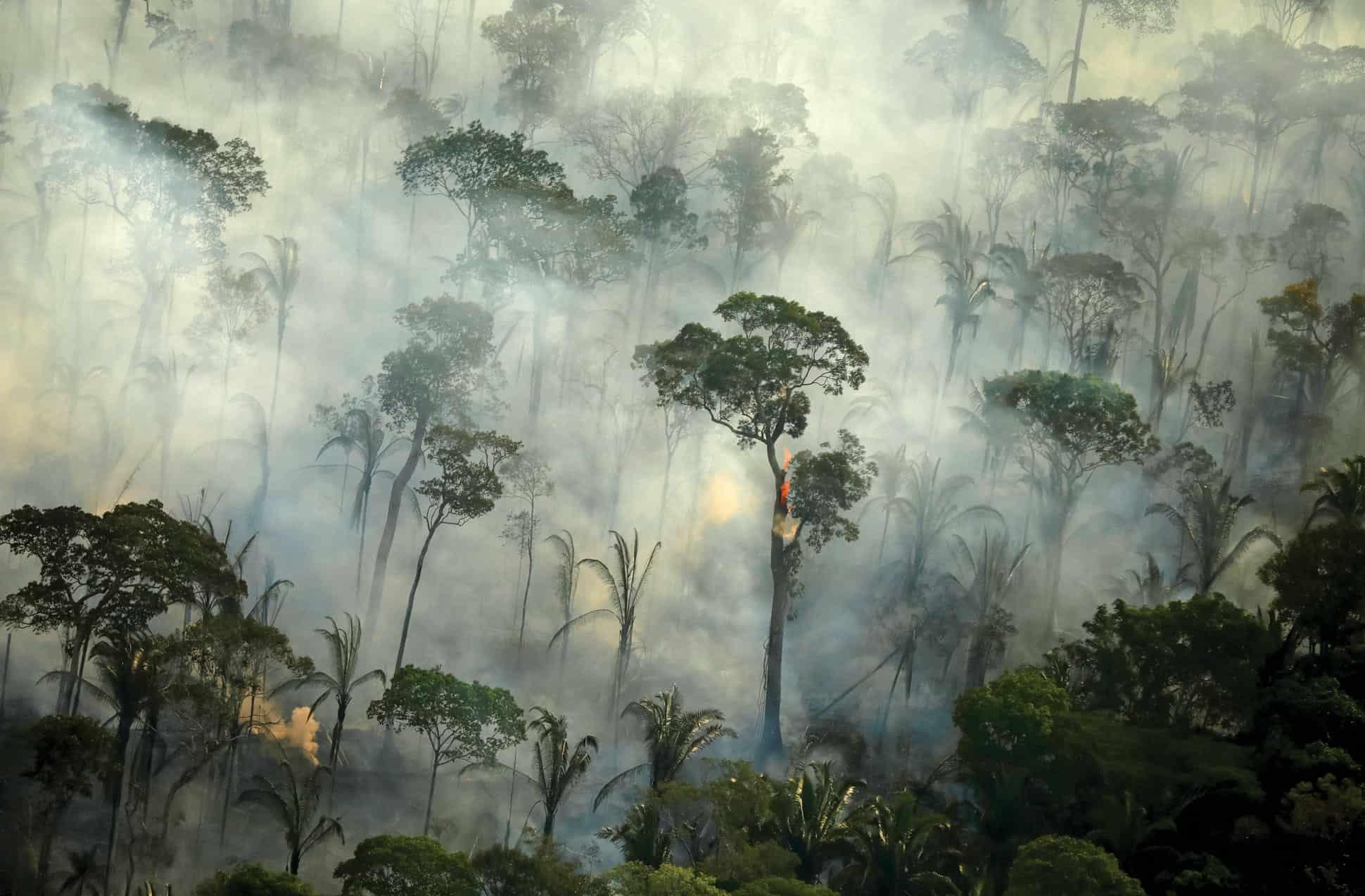 amazonas cambio climatico