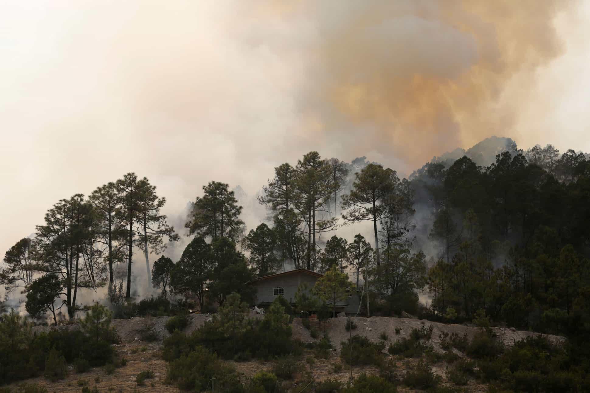 Cenizas-quedan--lecciones-de-la-temporada-de-incendios-Gatopardo