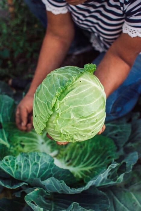 Una revolución en la industria agrícola