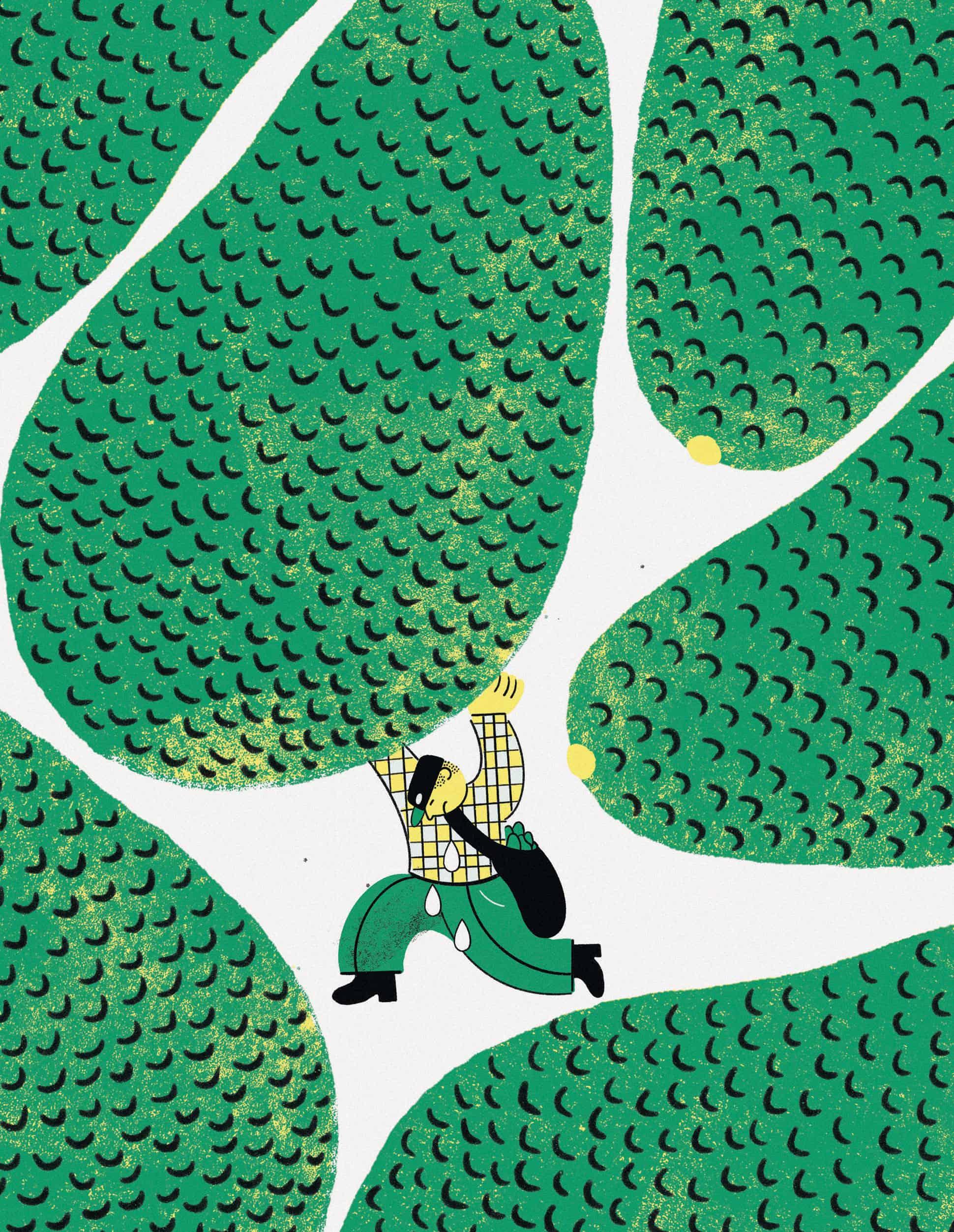 aguacate fruto de la discordia en michoacan