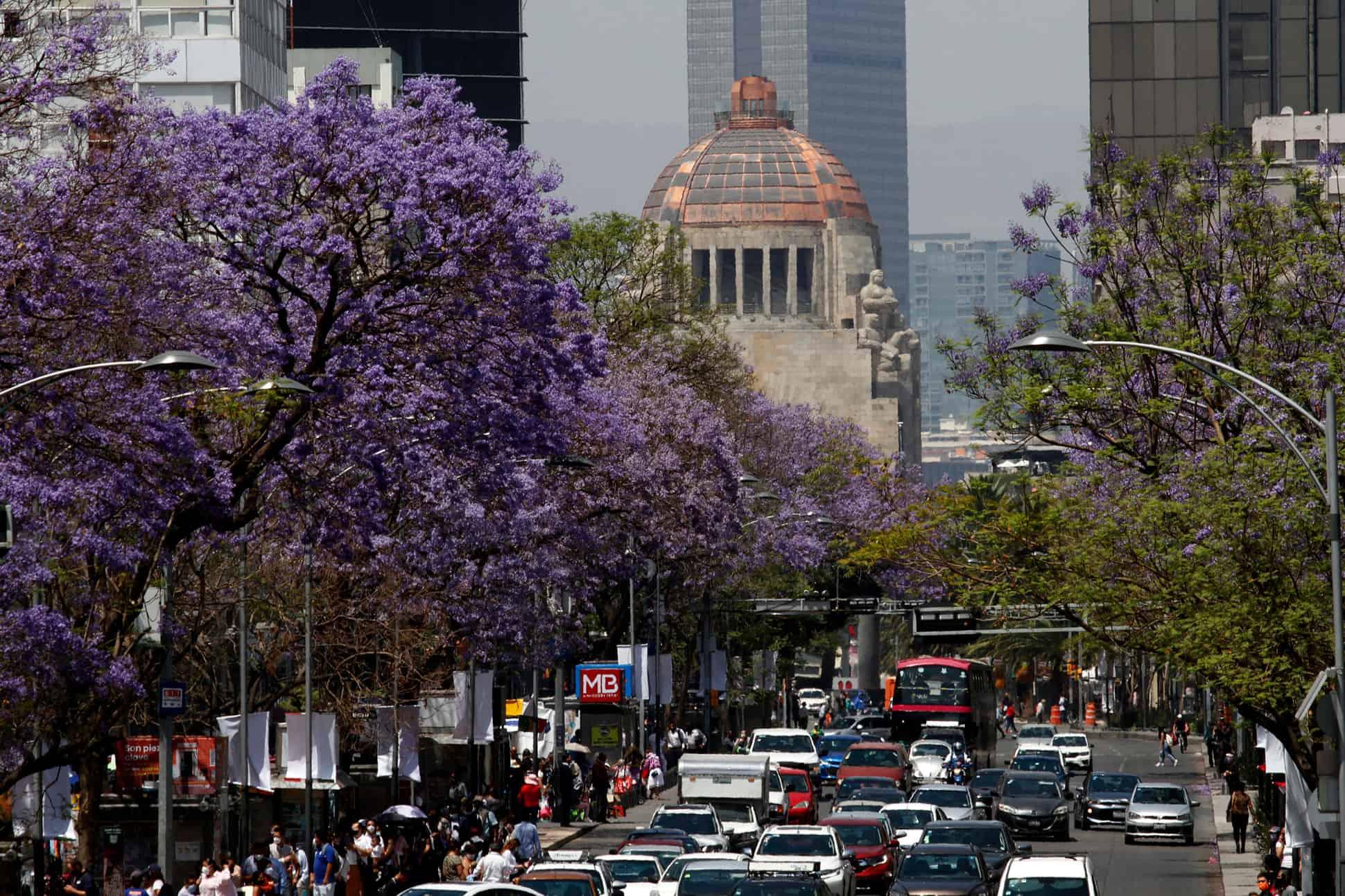 temporada-de-jacarandas-en-la-ciudad-de-mexico