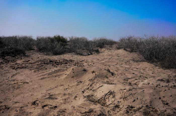 Monte de tierra en el municipio El Dorado donde las Sabuesos Guerreras encontraron siete cuerpos enterrados de desaparecidos.