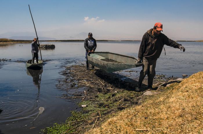 Después de un día de trabajo cortando tule, un grupo de pescadores da por terminada su jornada.