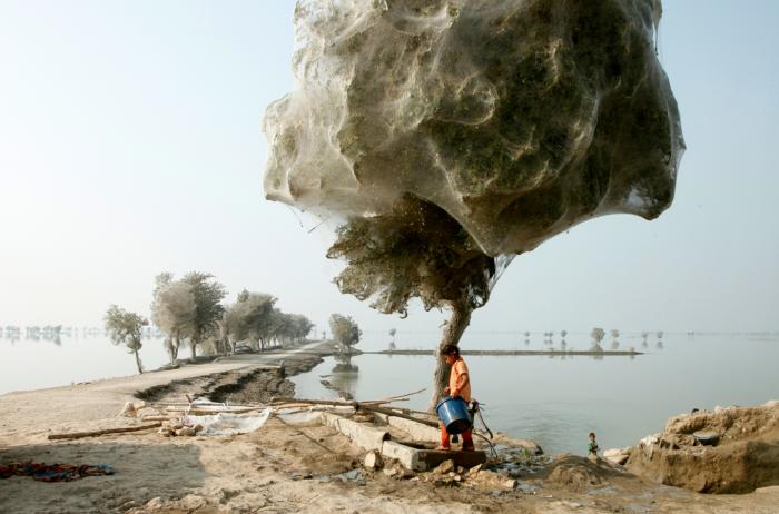 Cada día y en menos de una hora, una araña teje alrededor de treinta metros de hilo para darle forma a una telaraña.